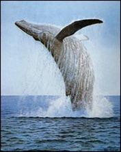 gorgona_whale_l