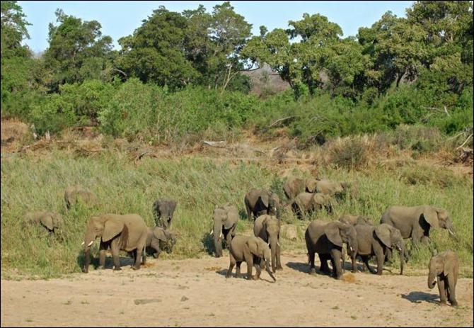 GUINEquatorial%20Guinea%20Elephants_20090422161124