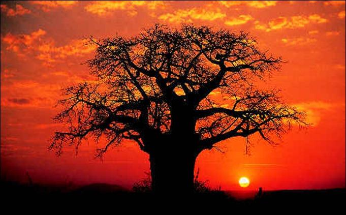 MAD-baobab