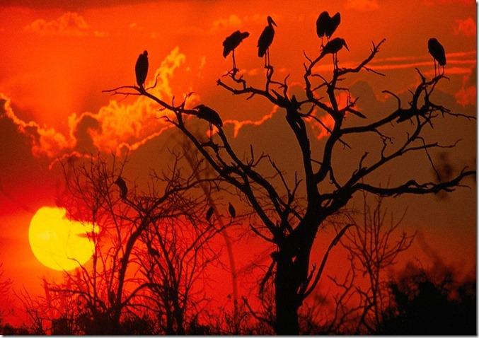 Botswana_Sunset__Africa