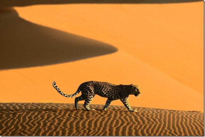NAM DesertPassage,Sossusvlei