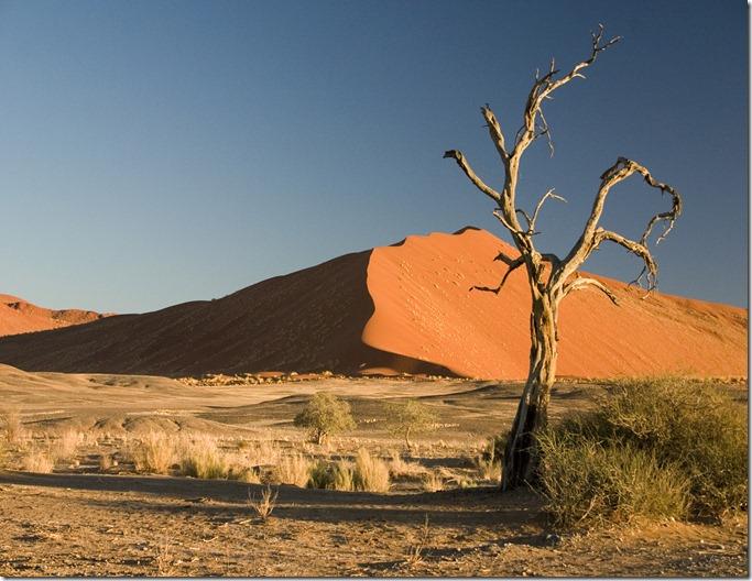 NAM Thorn_Tree_Sossusvlei_Namib_Desert_Namibia_Luca_Galuzzi_2004