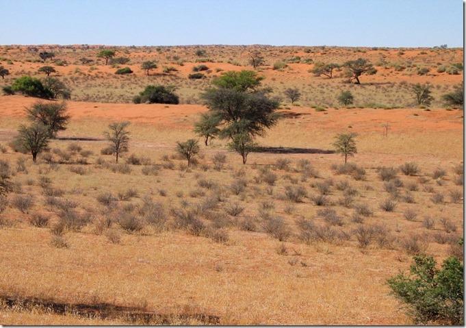 NAMkalahari-desert