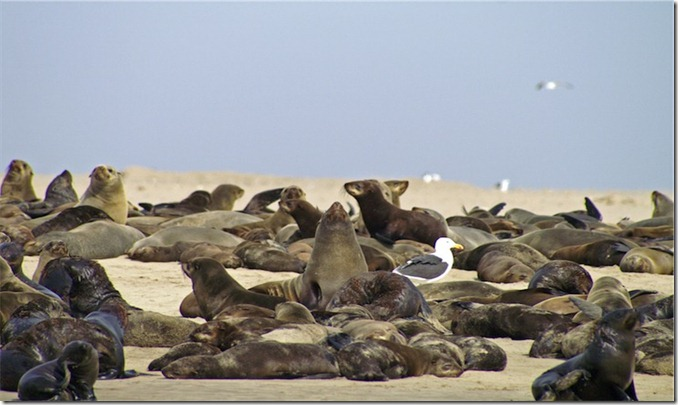 Namibia_Walvis_Bay