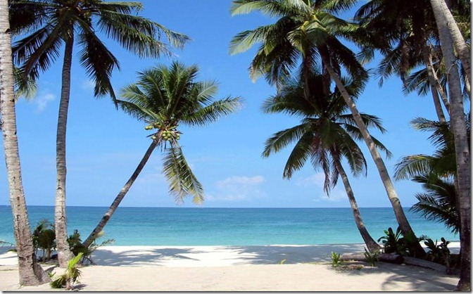 fil boracay_palm_trees1