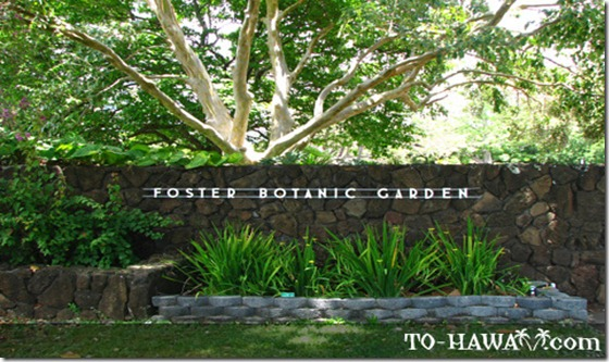 foster_botanical_garden_honolulu