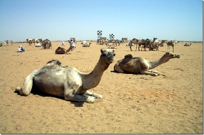SUD kamel_omdurman