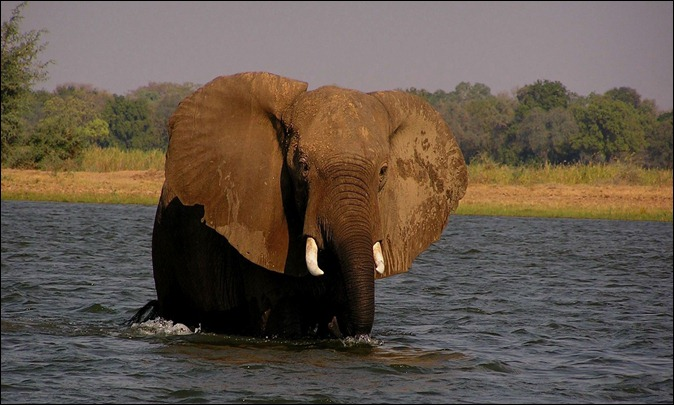 ZambeziLAKE KARIBA