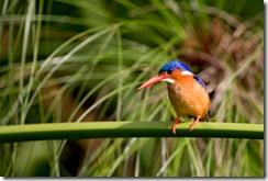 SAOTbird-
