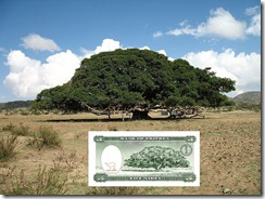 Eritrea_five_nakfa_tree