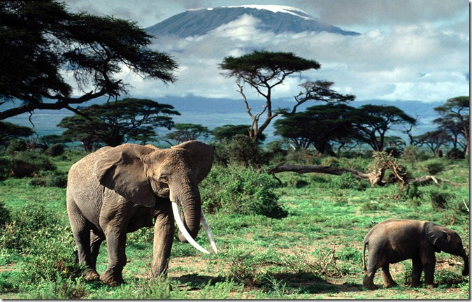 TAN kilimanjaro2