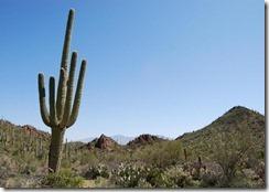 saguaro_